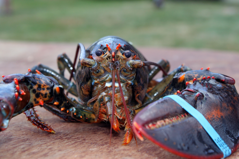 krabben-exclusive-living-meeresfruechte-istrien-tar-kroatien